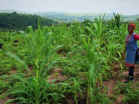 DRC farm